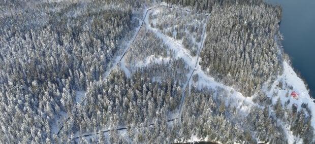 Revelstoke Caribou Rearing in the Wild pen