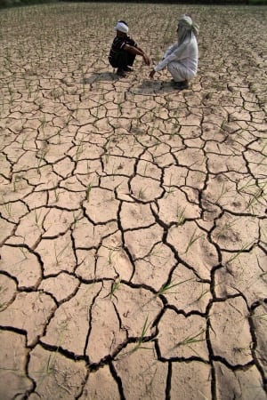 India parched paddy field