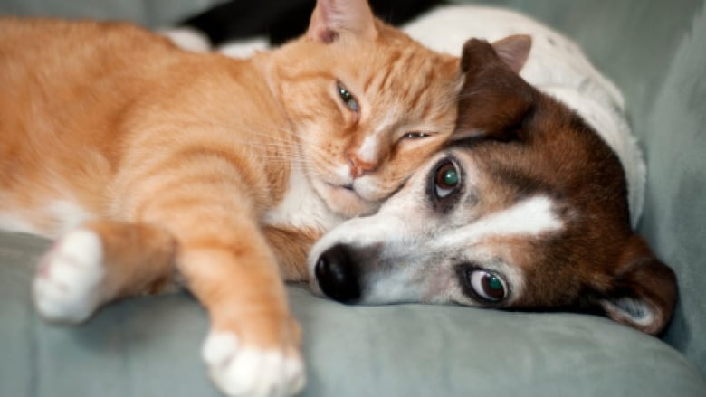 Pet euthanasia: Finding peace putting animals down | CBC News