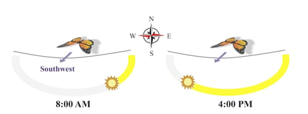 MOnarch compass