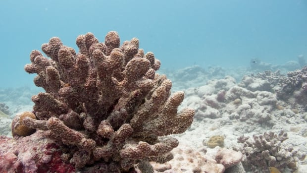 Most of the structure of the reef remains, but it has already begun to weaken and is expected to break down.
