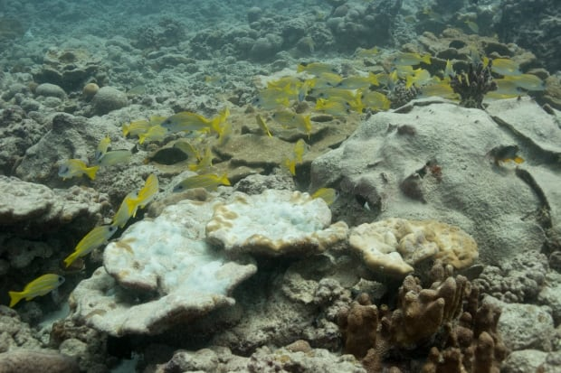 Coral Reef Christmas Island dying