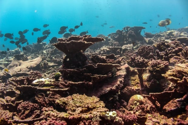 Coral reefs on Christmas Island dead after El Niño - British ...