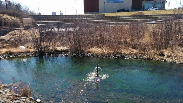 The man-made spawning pool in Grassy Brook is fed by 75 pipes that drain stormwater from surrounding parking lots and buildings.