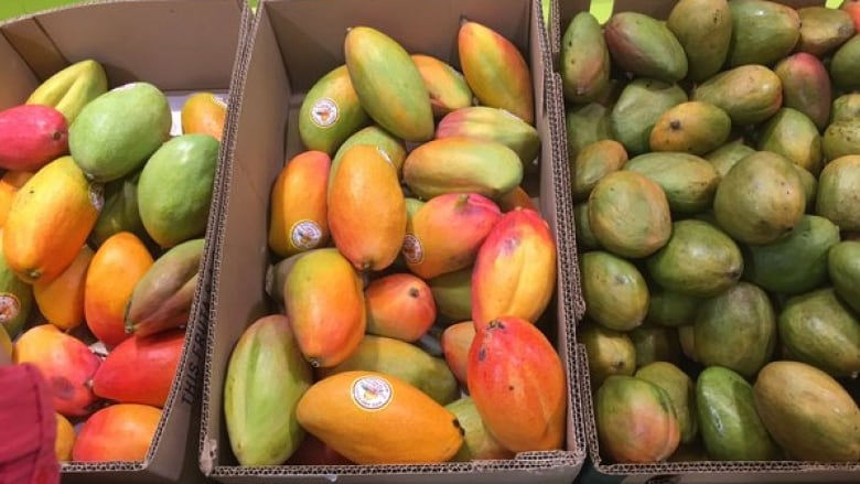 Mango Types Pictures