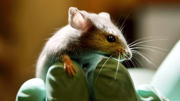 A new study has found that mice deprived of vitamin A before birth are more likely to develop symptoms of Alzheimer's disease.