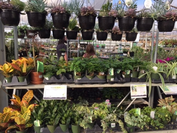 5 gardening tips for victoria day weekend kitchener for Canadian gardening tips