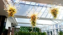 Winter Garden Chihuly sculptures