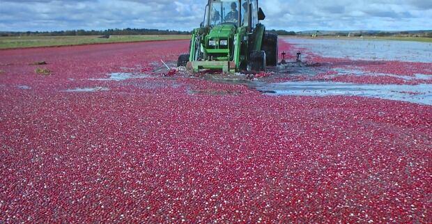 Cranberries Nova Scotia