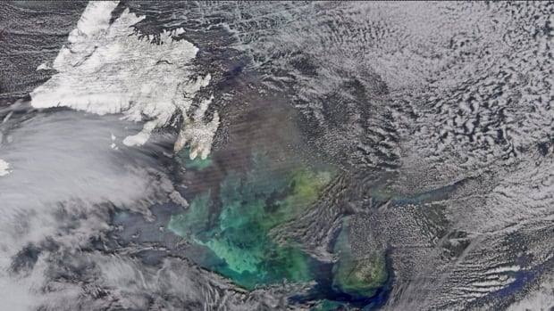 This NASA image shows phytoplankton blooming off the Grand Banks of Newfoundland, an area the scientists will be studying.