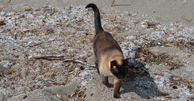 Nurdles cat