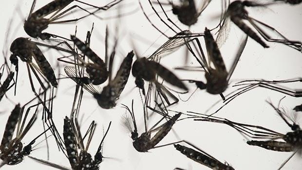 zika-virus-620
