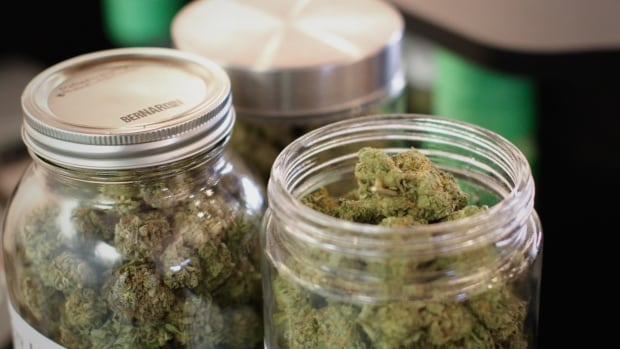 Three large jars full of marijuana buds sit on the counter at VanCity Weed, a Robson Street dispensary that has been issued a development permit.