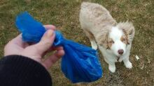 Doggie Doo Poop Bag