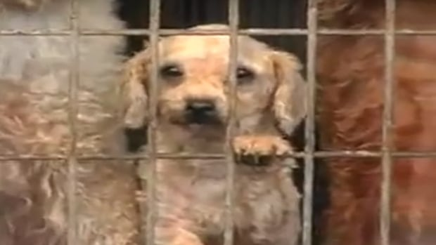 A documentary on the horrors of puppy mills was screened in Calgary Sunday afternoon.