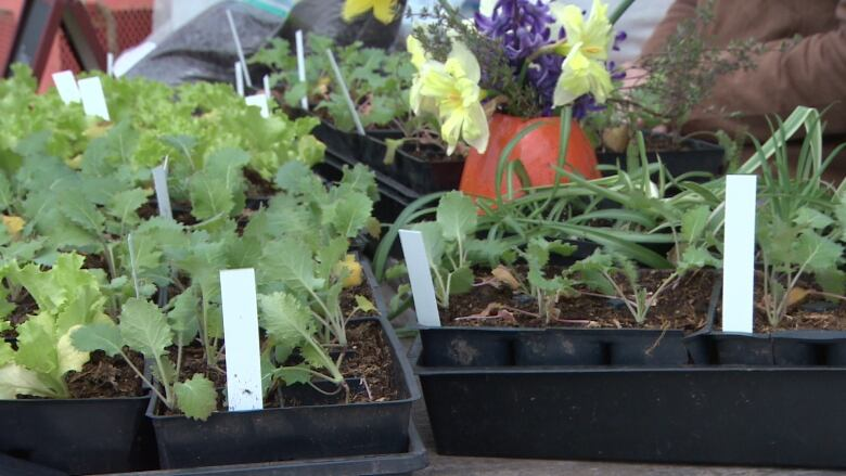 Common Roots Urban Farm grows its business, sells manure, plants
