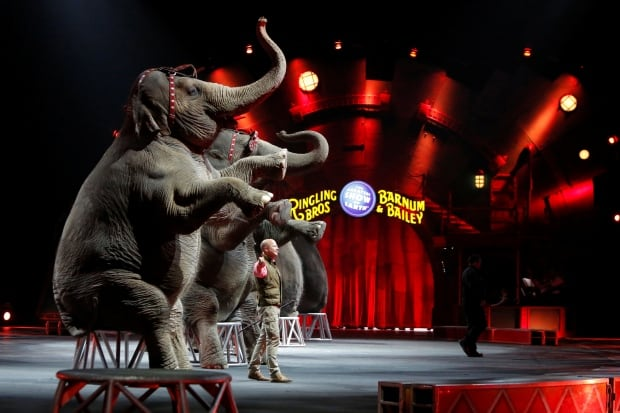 USA-CIRCUS/ELEPHANTS