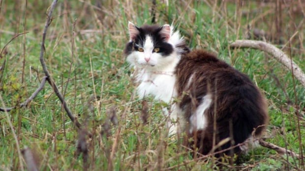Fewer vouchers available for fixing cats in windsor this year a feral cat is seen in wantagh ny in this april 2016 photo sciox Image collections