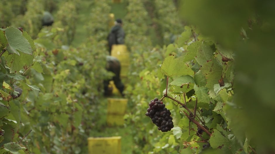 Sour Grapes documentary pulls back curtain on one of the biggest wine frauds in history.