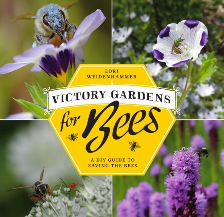 10 tips for creating a bee-friendly garden | CBC News