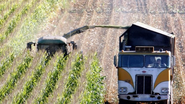 A harvester works through a field of genetically modified corn near Santa Rosa, Calif. in a 2005 photo. There's no evidence of environmental problems caused by genetically modified crops, but pesticide resistance is a problem, a new report says.