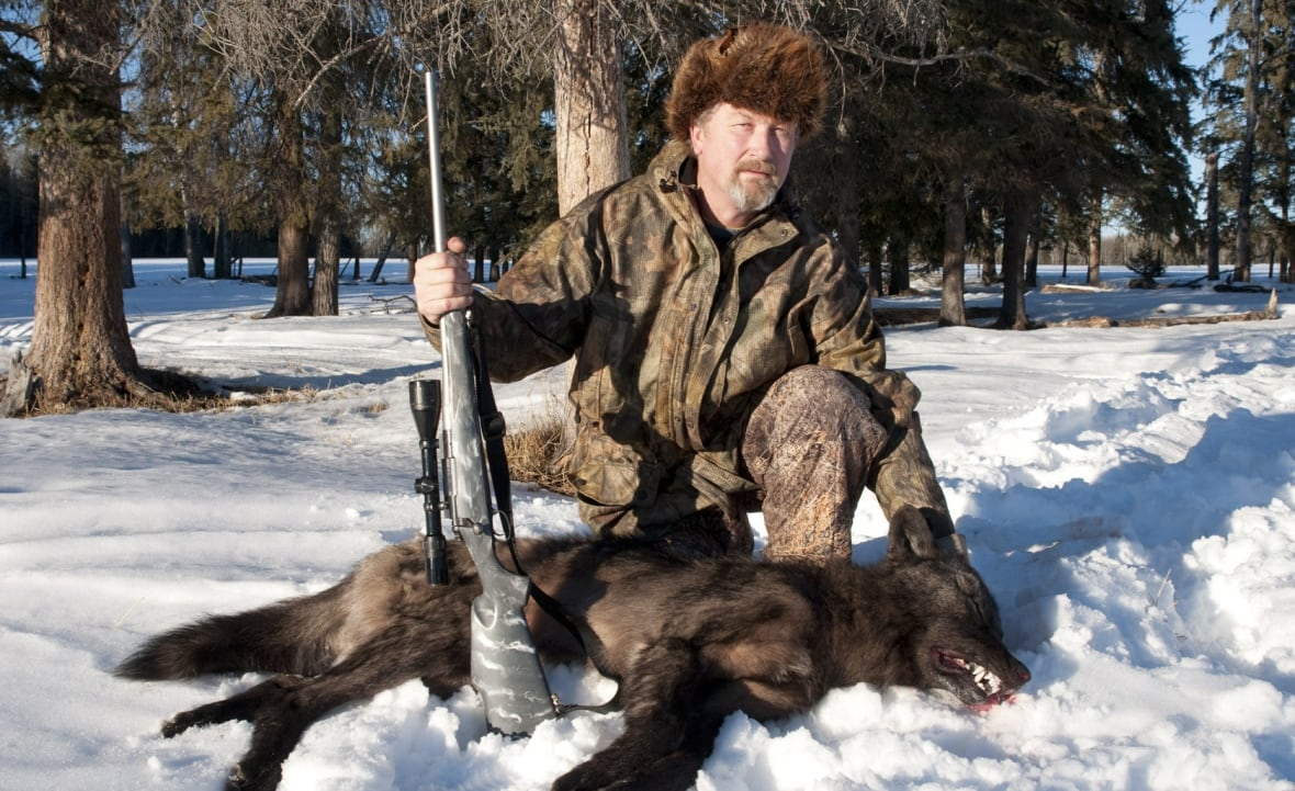 Bill Abercrombie, president of the Alberta Trappers Association, shown in this file photo, says trappers are the best solution to control wolves preying on endangered caribou herds. (submitted by Bill Abercrombie)
