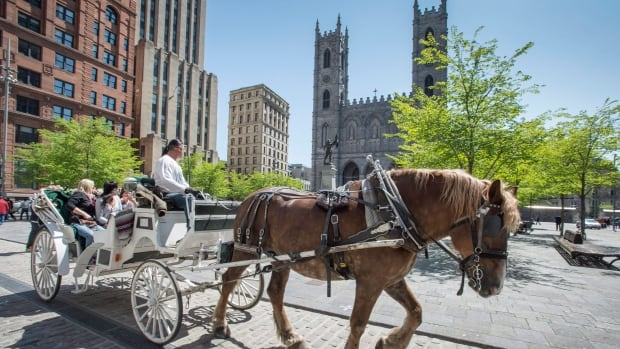 A horse-drawn carriage rides past the Notre Dame cathedral in Old Montreal. Montreal Mayor Denis Coderre announced a one-year moratorium on the carriages following recent accidents.