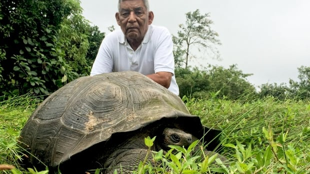 The eastern Santa Cruz tortoise, a new species of giant Galapagos tortoise, was given the scientific name Chelonoidis donfaustoi, after local park ranger Don Fausto.