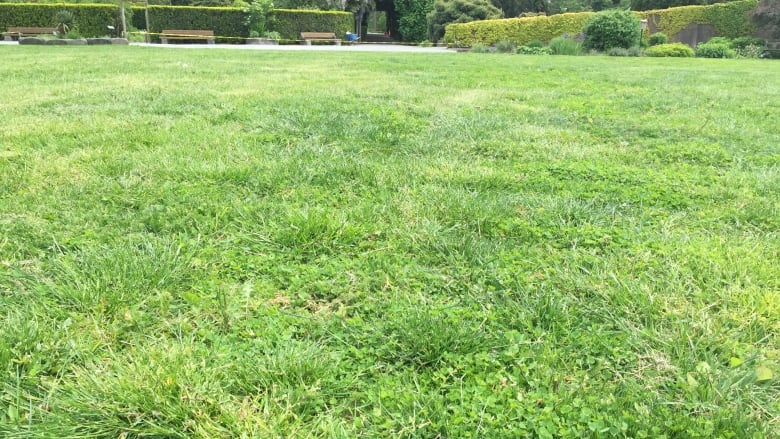 University Of Guelph Prof Says Fertilize And Mow Often For A Better