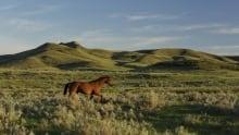 Praire grassland