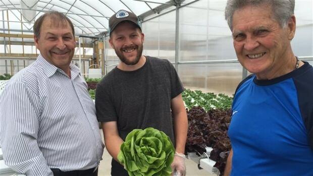 armand belliveau hydroponic greenhouse