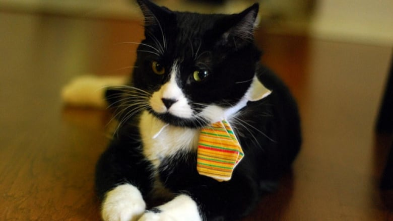 a resume for fluffy b c renters dial up the charm to find pet
