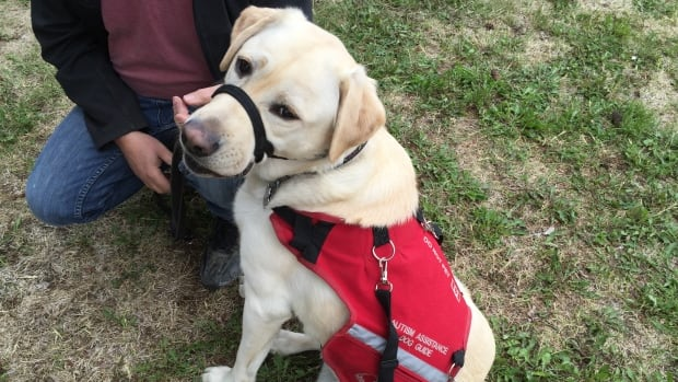 A private member's bill from Progressive Conservative MPP Michael Harris would extend the same rights currently given to blind people to other people with disabilities who depend on service dogs, such as people with autism and post-traumatic stress disorder.