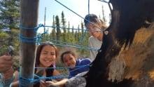 Kids at moose hide tanning camp in Lutsel K'e