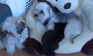 Dog nursing cat to health may 31 2016