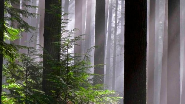 Port Moody's Bert Flinn Park, at 311 acres, is a centre-point of hiking, biking and dog walking.