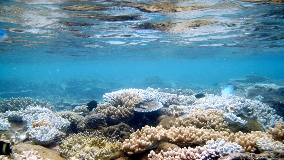 Sound ecologist Bernie Krause captured the changing environment of Fiji's coral reef using an underwater microphone.