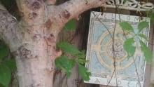 Mary Garden 4