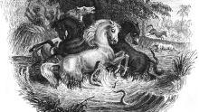 humboldt horses