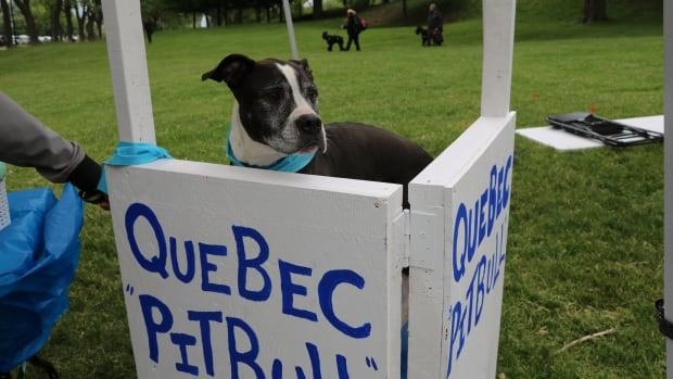 A proposed bylaw in Montreal will place strict rules on pit bull owners in the city's 19 boroughs.