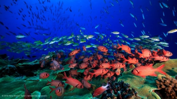 A new study has found that coral reefs in remote places aren't necessarily in better shape than those near populated areas.