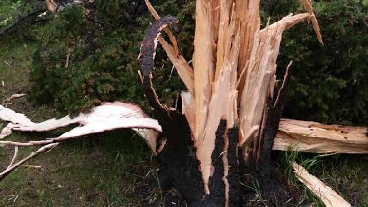 Winnipeg Tree Explodes From Lightning Strike Manitoba