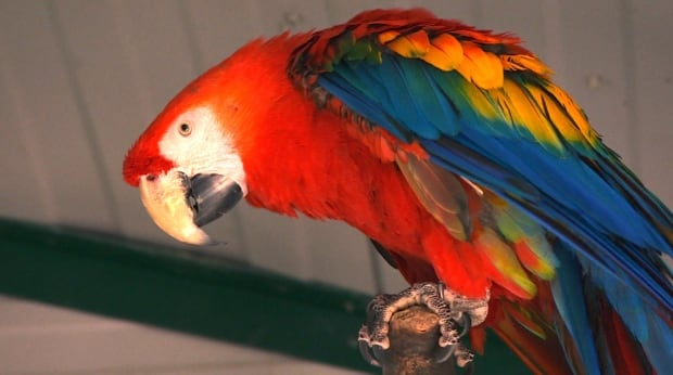 Coombs World Parrot Refuge Red Macaw