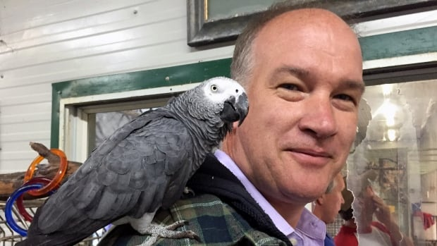 The CBC's Chris Brown and an African grey parrot who befriended him during a recent visit to the facility on Vancouver Island.
