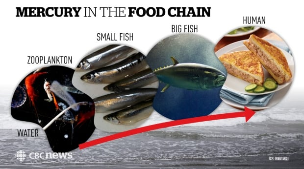 Biomagnification in the food chain