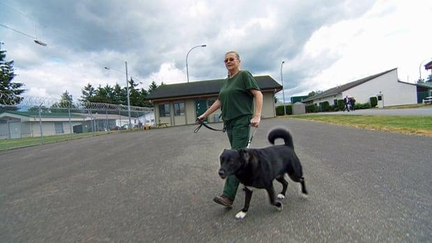 Ellen walking Chilko
