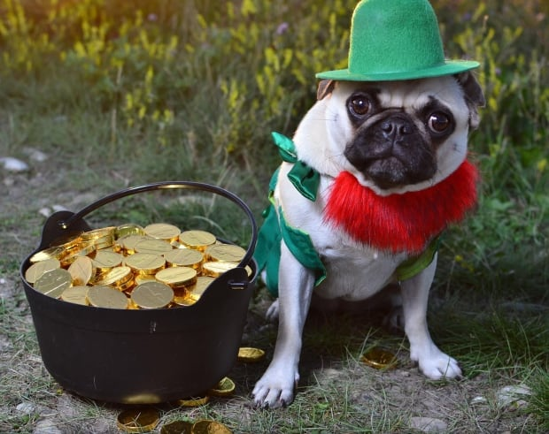 St. Pugtrick's Day