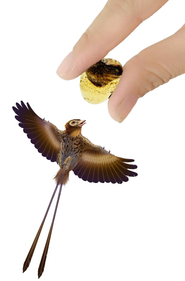 Amber, hand and life-sized reconstruction of bird