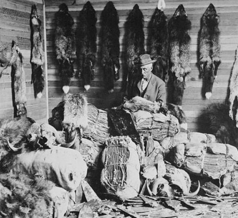 Provider Of Fur Food And Floods The Beaver Is A Canadian Symbol