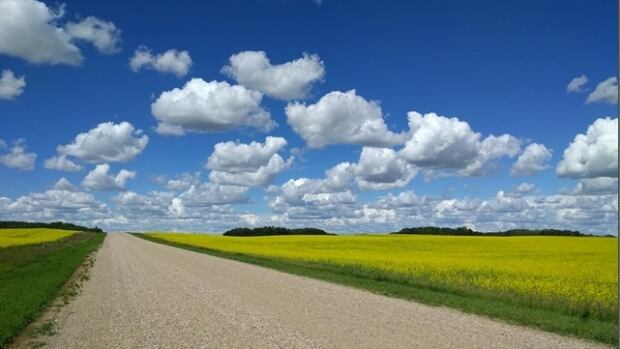 Ninety-three per cent of canola in Saskatchewan has been combined so far, according to the province's latest crop report.